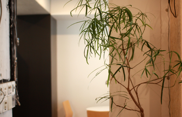 coto(コト)さんの植栽
